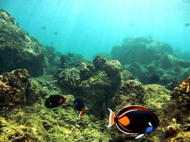 Coral 'adapting to warmer ocean temperatures'