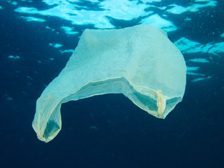 Plastic bags have been found dumped in our oceans