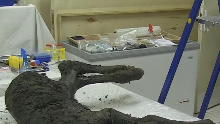 Scientists discover 40,000-year-old foal in Siberian permafrost