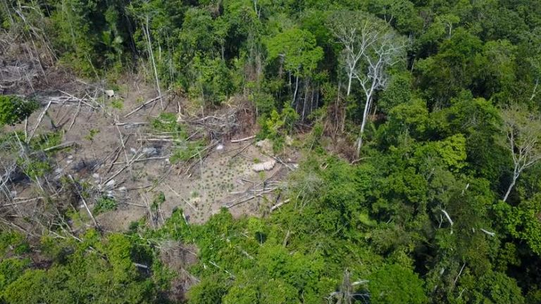 Drone footage captures the mystery tribe in indigenous territory Valo do Javari