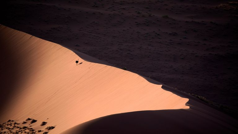 Common Ostrich taken in Sossusvlei, Namibia, by Salvador Colvée from Spain. Gold winner of Birds in the Environment