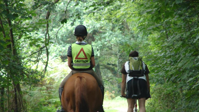 A cyclist passes a horse on a woodland track