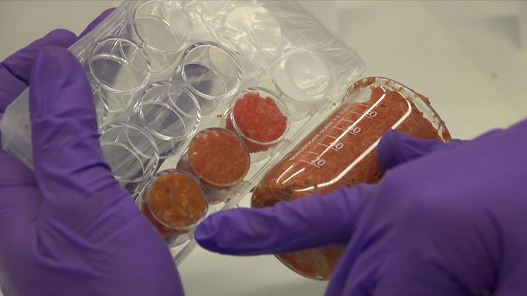Lab meat is created by cultivating animal cells