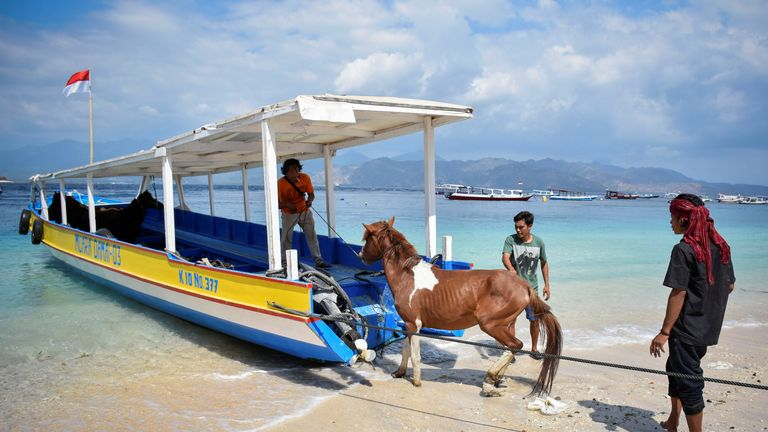 A horse is evacuated from Gili Trawangan, just off Lombok