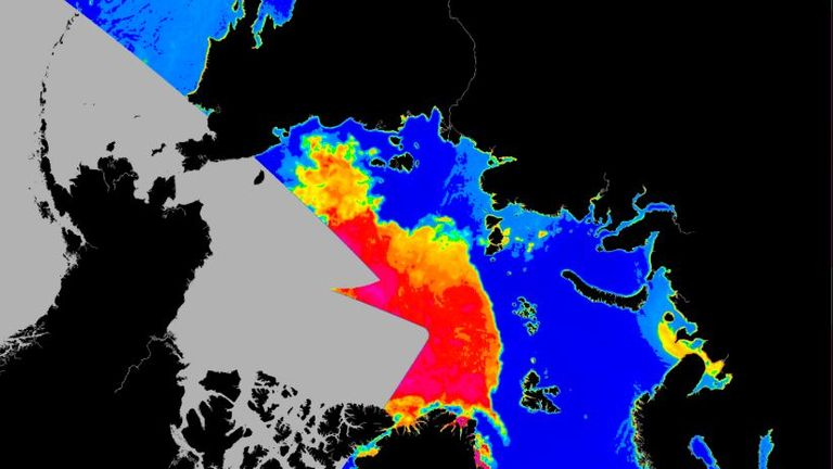 An image showing the extent of sea ice around Greenland on 22 August. Pic: Seaice.dk