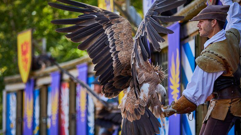 The theme park is training its crows to pick up litter. Pic: Puy du Fou