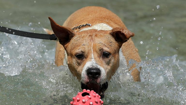 A dog jumps for a ball in a public fountain in Vienna, Austria