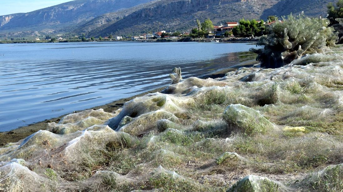 The webs are said to cover herbs and palm trees on the stretch of land. Pic: Giannis Giannakopoulos