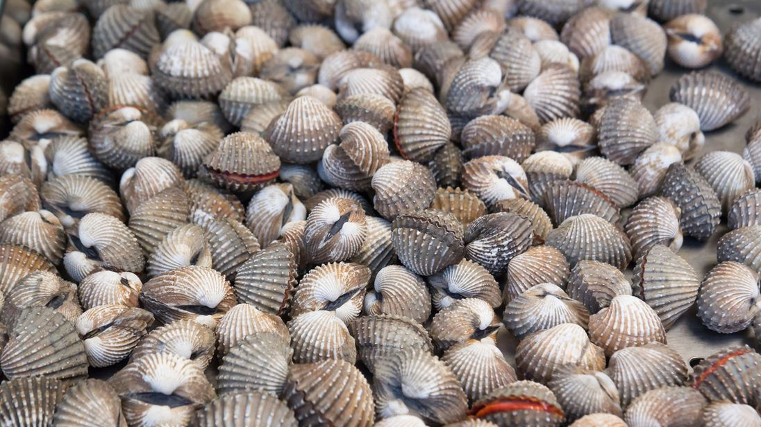 Cockles are the smaller relative of the clam