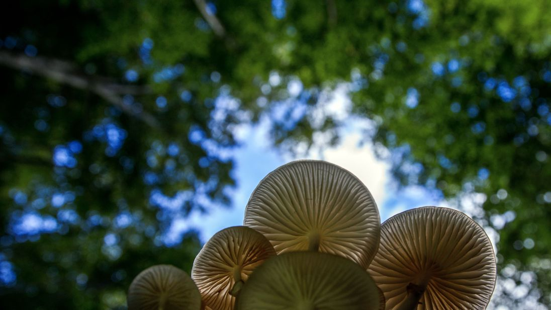 Around 2,000 fungi species are still be classified each year