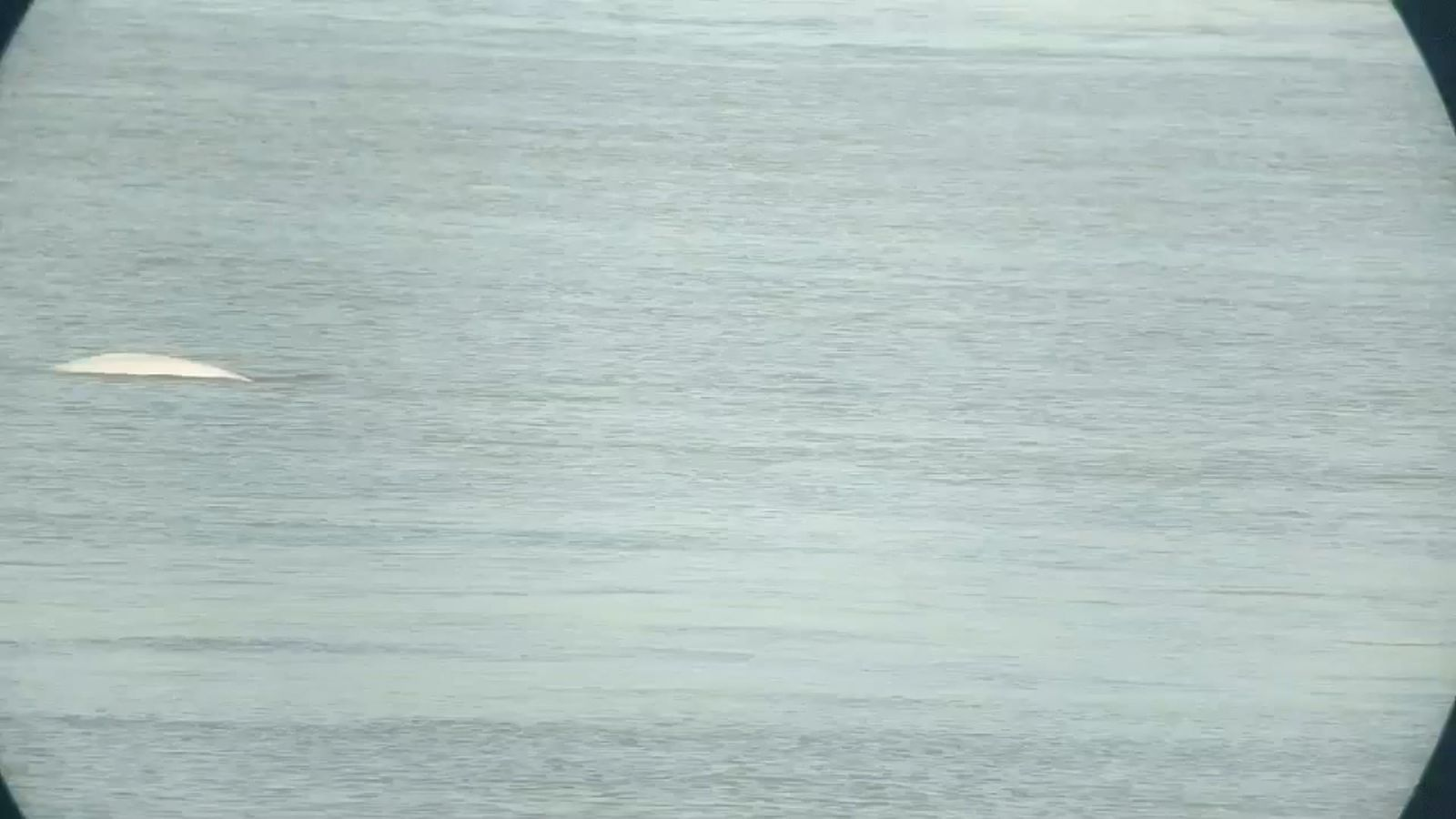 RSPCA investigating reports of whale sighting in Thames