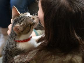 A visitor pets a cat at the pop-up 'Cat cafe', a cafe where patrons can interact and adopt cats, in New York, April 25, 2014