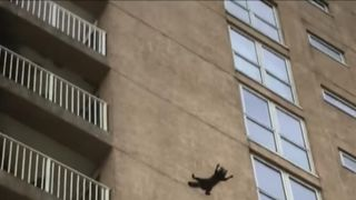 Raccoon jumps nine floors to the ground and flees.