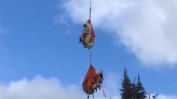 Hundreds of goats have been relocated by helicopter in Washington.