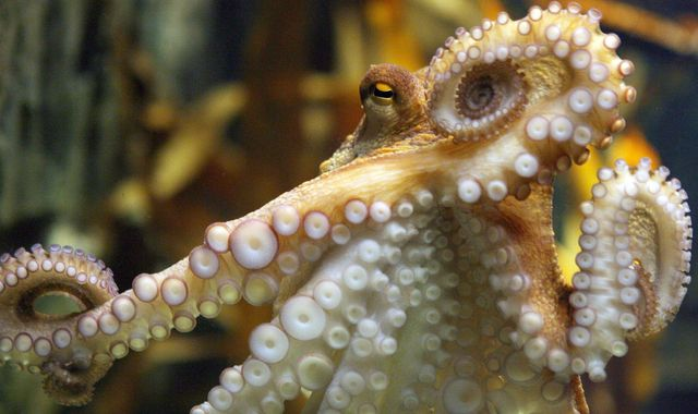 On ecstasy, octopuses reached out for a hug