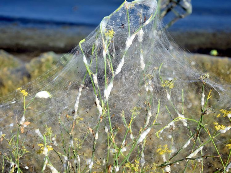 Greek town covered in spider webs