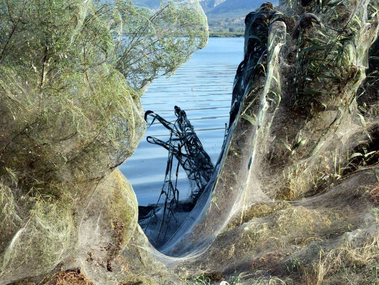 Eerie spiderweb covers entire shoreline in Greece