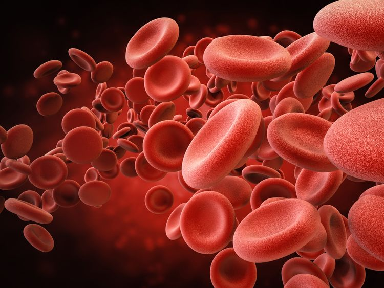 Blood factors obtained from young beings can improve late-life health in animals, the study reveals