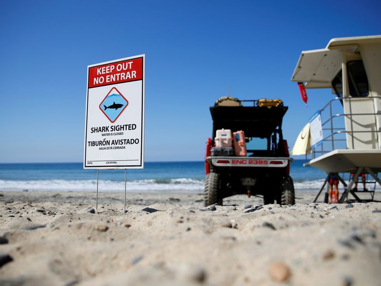 After clearing the ocean area of surfers and swimmers, lifeguards watch over the waters, off Beacon's Beach, after authorities said a young boy was attacked by a shark in Encinitas, California