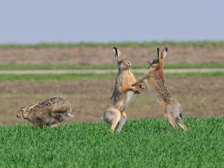 Hare numbers have also fallen across the country