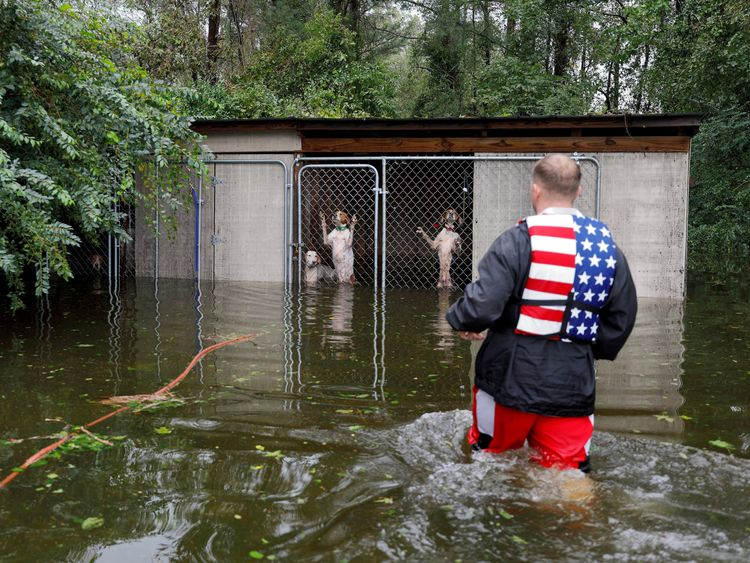 Dogs that were left caged by an owner who fled rising flood waters in the aftermath of Hurricane Florence, are rescued by avolunteer