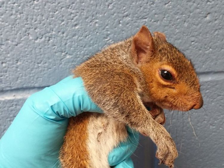 The squirrels recovered well from the anaesthesia. Pic: Wisconsin Humane Society