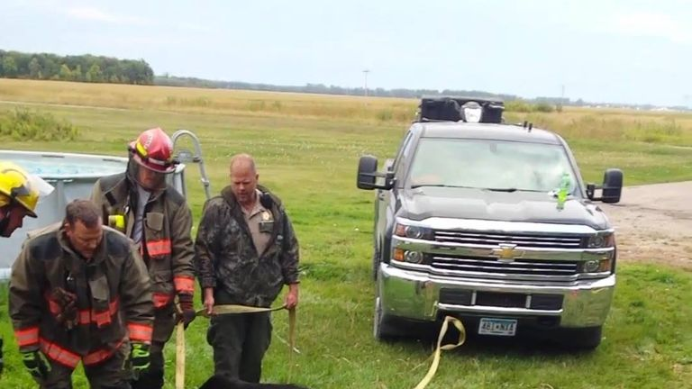 The seemingly healthy bear ran into the woods after being freed. Pic: Minnesota Department of Natural Resources