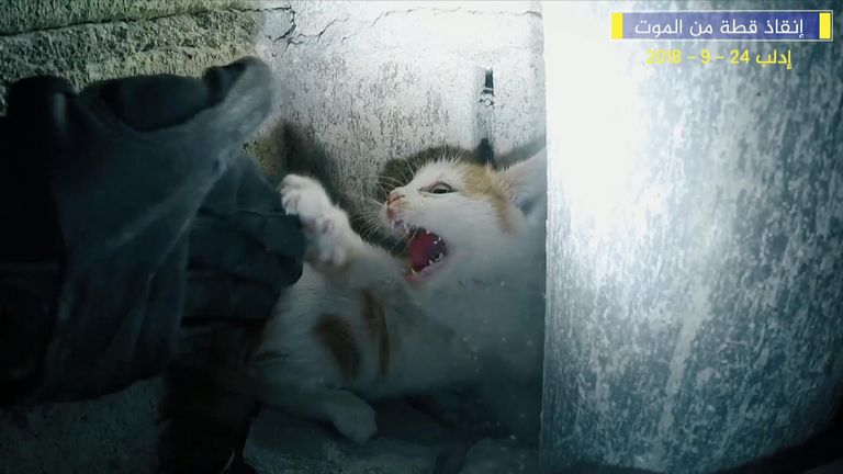 The Syrian Civil Defence, also known as the White Helmets, rescued a kitten trapped in a building in Idlib city, Syria.