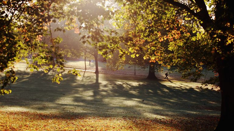 The leaf fall timetables will run from October to December