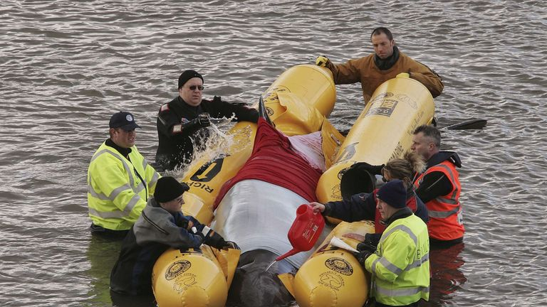 In 2006, a whale died after it swum up the Thames into central London