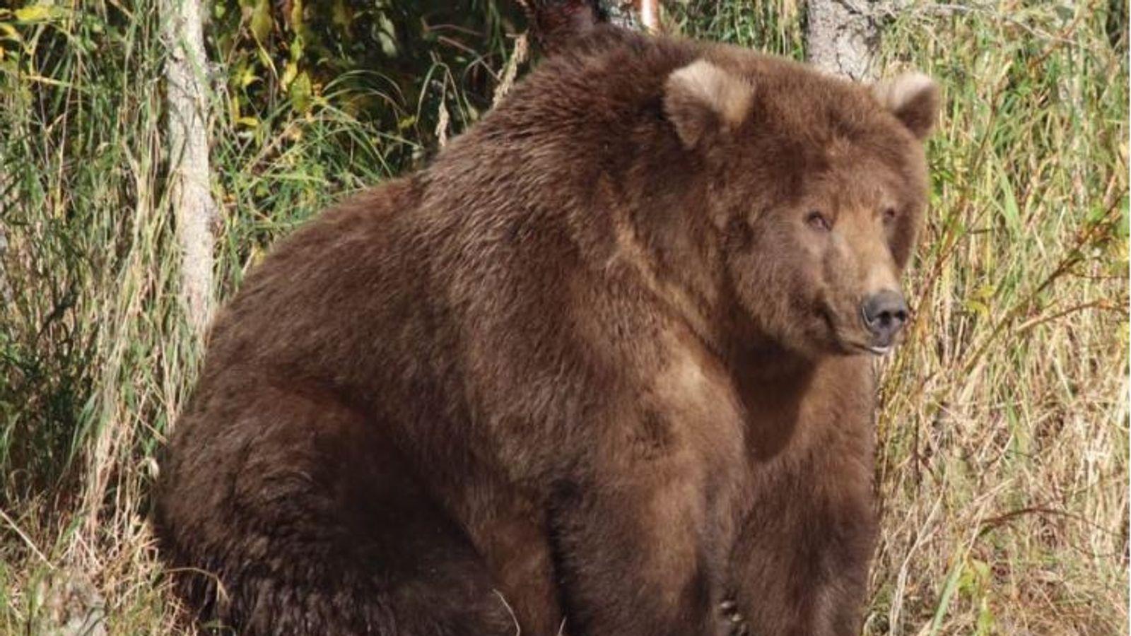 Beadnose的'神话般的松弛'赢得了最肥胖的熊竞争