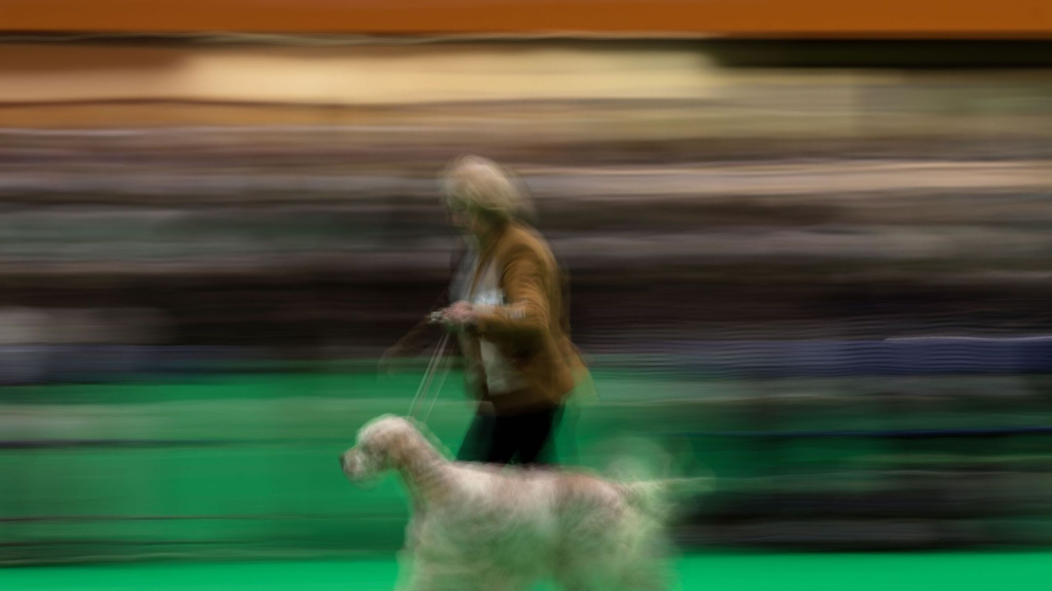 Blackstone among £800m suitors for Crufts host NEC Group