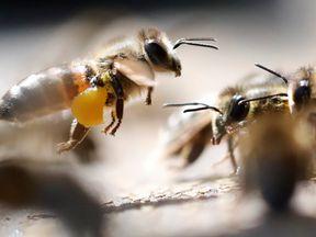 The long warm summer has increase honey production