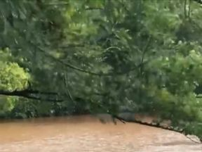 Man swims through flood to rescue his horses in Wales