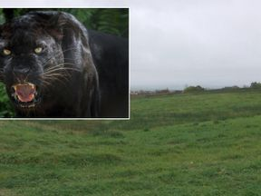 A panther could be on the loose near two Scottish villages