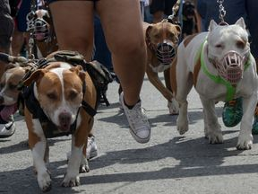 Pit Bull Terriers are one of the breeds banned in the UK