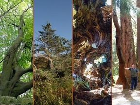 The Woodland Trust has revealed the winners of its 2018 Tree of the Year competition