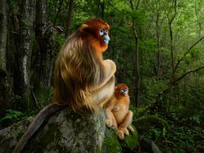 The overall best photo, taken by Marsel van  Oosten