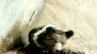 The brown bear got was stuck in the hydroplant for 6 hours