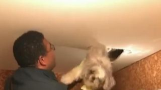 A dog is rescued from a ventilation pipe via a hole in the ceiling in Virginia