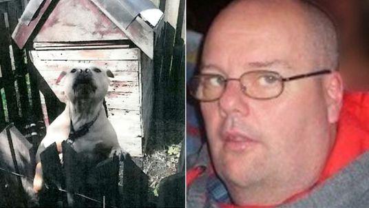Killer dog who mauled David Allam to death