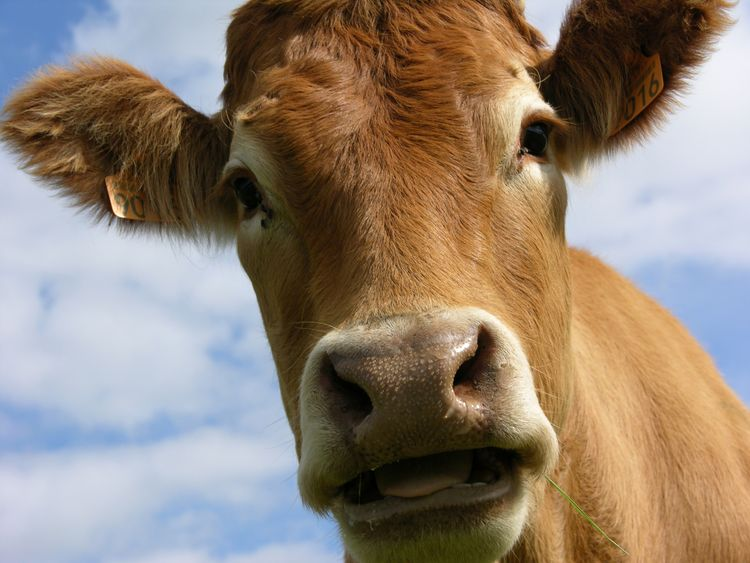 The condition causes similar symptoms to mad cow disease