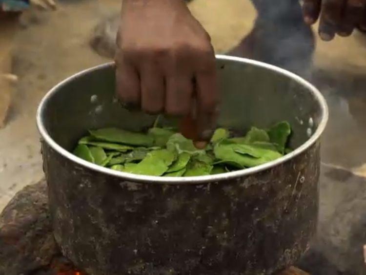 Starving Yemenis are resorting to eating leaves