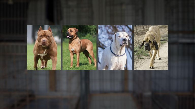 The Pit Bull, Japanese Tosa, Dogo Argentino and Fila Brasileiro are banned