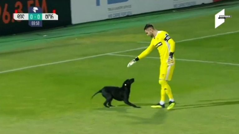 Dog invades Georgian football match