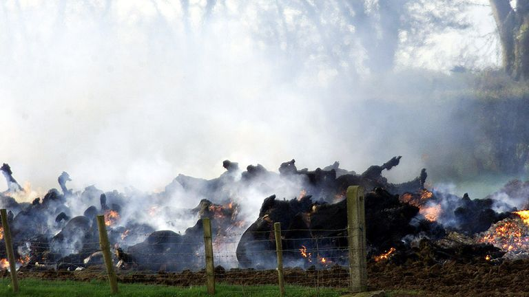 A funeral pyre for cattle during the foot and mouth outbreak in 2001