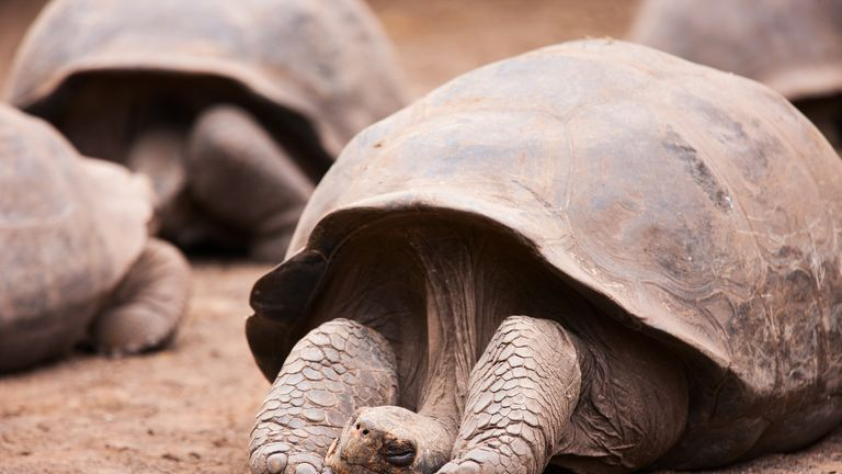 The Galapagos tortoise can live up to 170 years