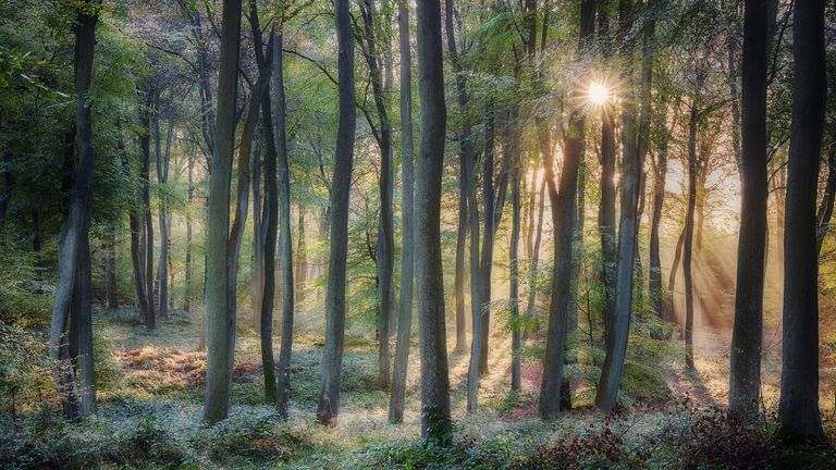 Winner of the LEE Filters Prize of the Landscape Photographer of the Year Awards, Morning Woodlands, Woodcote, Oxfordshire, England by Ceri David Jones