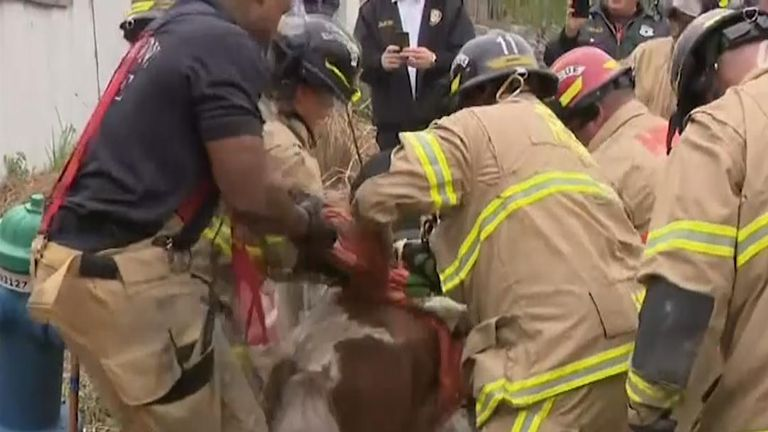 Firefighters rescue pony from manhole in Texas