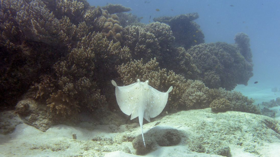 Swimmer is first stingray victim since Steve Irwin